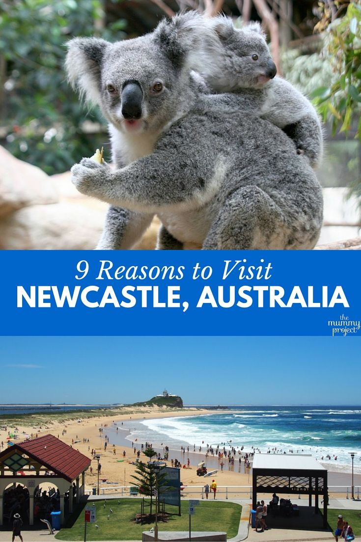 Why visit Newcastle, Australia? Beautiful harbour and beaches, dolphins & whales, many vineyards and a laidback, relaxed vibe. It's the perfect spot for a holiday!