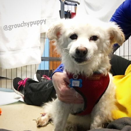 Meet the adorable Mr. Shiro! This sweet, terrier mix guy wins over everyone