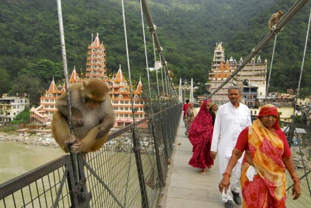Planning on visiting Rishikesh India? This Rishikesh travel guide contains plenty of travel information and tips for your trip to the birthplace of yoga.