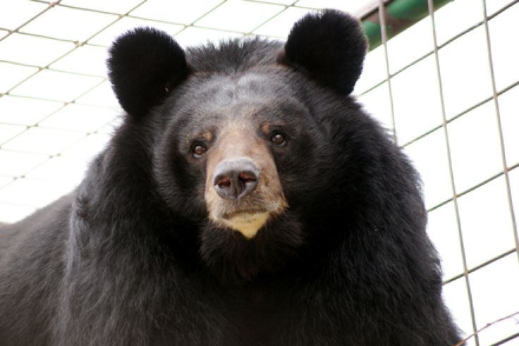 Bears Rescued From North Carolina Park Finding Contentment At Texas Animal Sanctuary