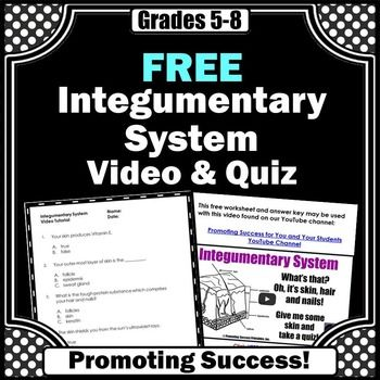 essay questions on the integumentary system The integumentary system is made up of skin, hair, nails, and glands it is the  most visible organ system and one of the most complex.