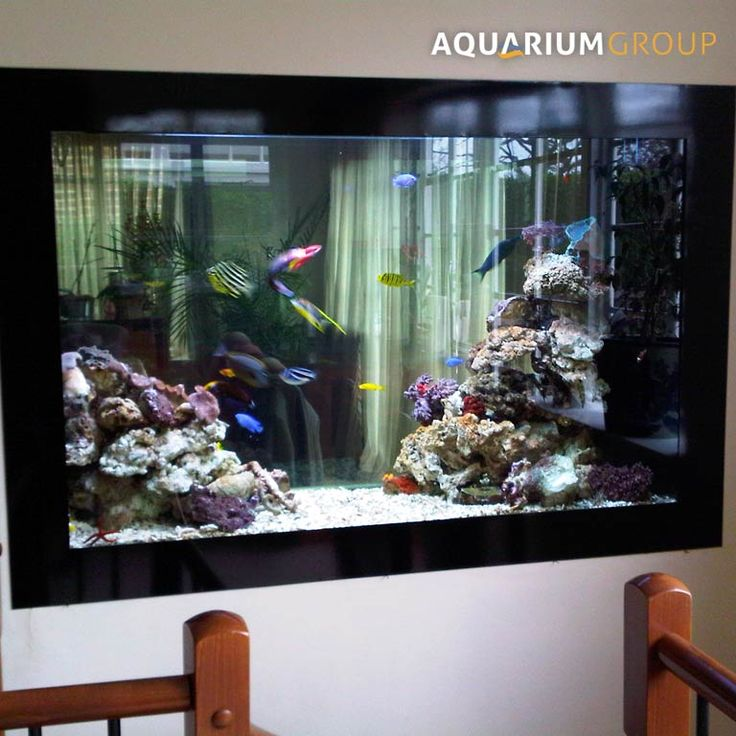 1000 Images About Fish Tank On Pinterest Cichlids