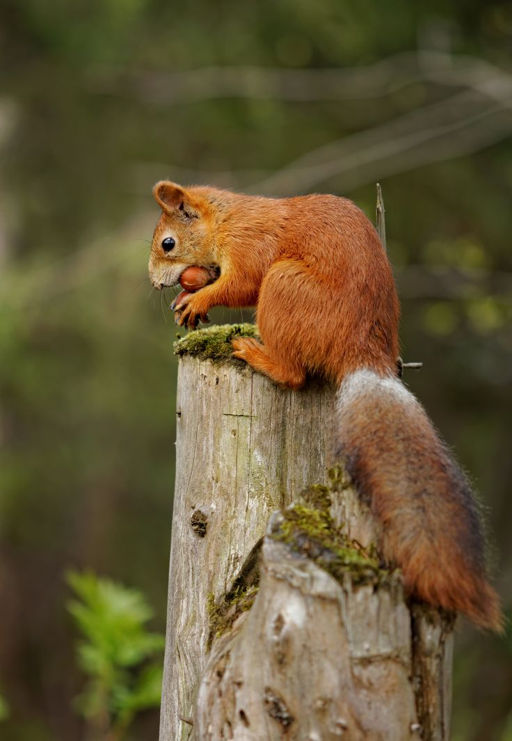 How can you take away more than one nut if you aren't a chipmunk? by Artem Kreo on 500px