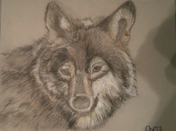 My wolf sketch, from a photo