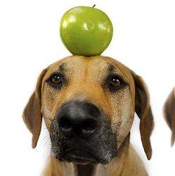 Les chiens et les fruits