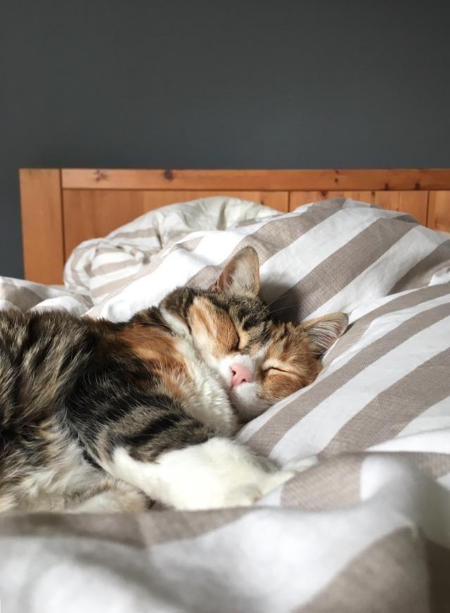 Wir Bleiben Am Feiertag Einfach Liegen Und Ihr Entdecke Noch Mehr Wohnideen Auf Couchstyle Living Wohnen Wohnideen Einrichten Katzenliebe Katzen Haustiere