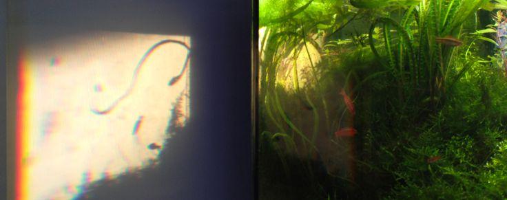 Akvaarion varjot heijastuvat seinään.