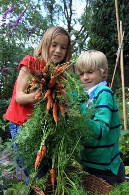 Moestuin; wortels