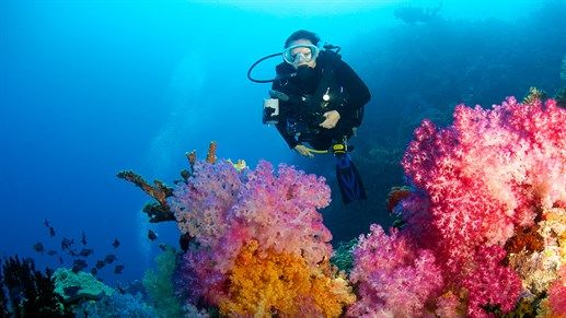 Diving in Fiji - Colorful corals awaits! #tropical #sea #underwater #kilroy #travel