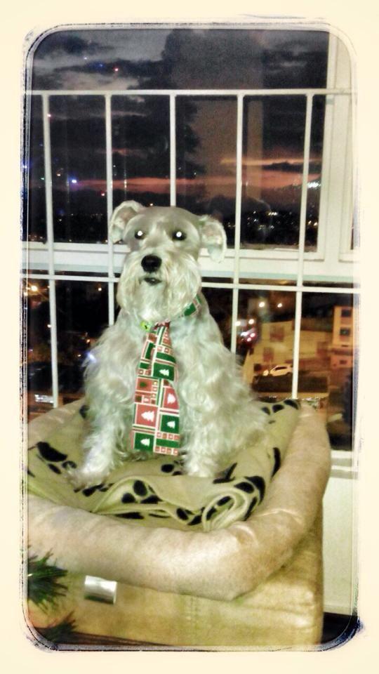 'Muñeca' con una de las bufandas de LA GARDENIA. #Bufandasparamascotas