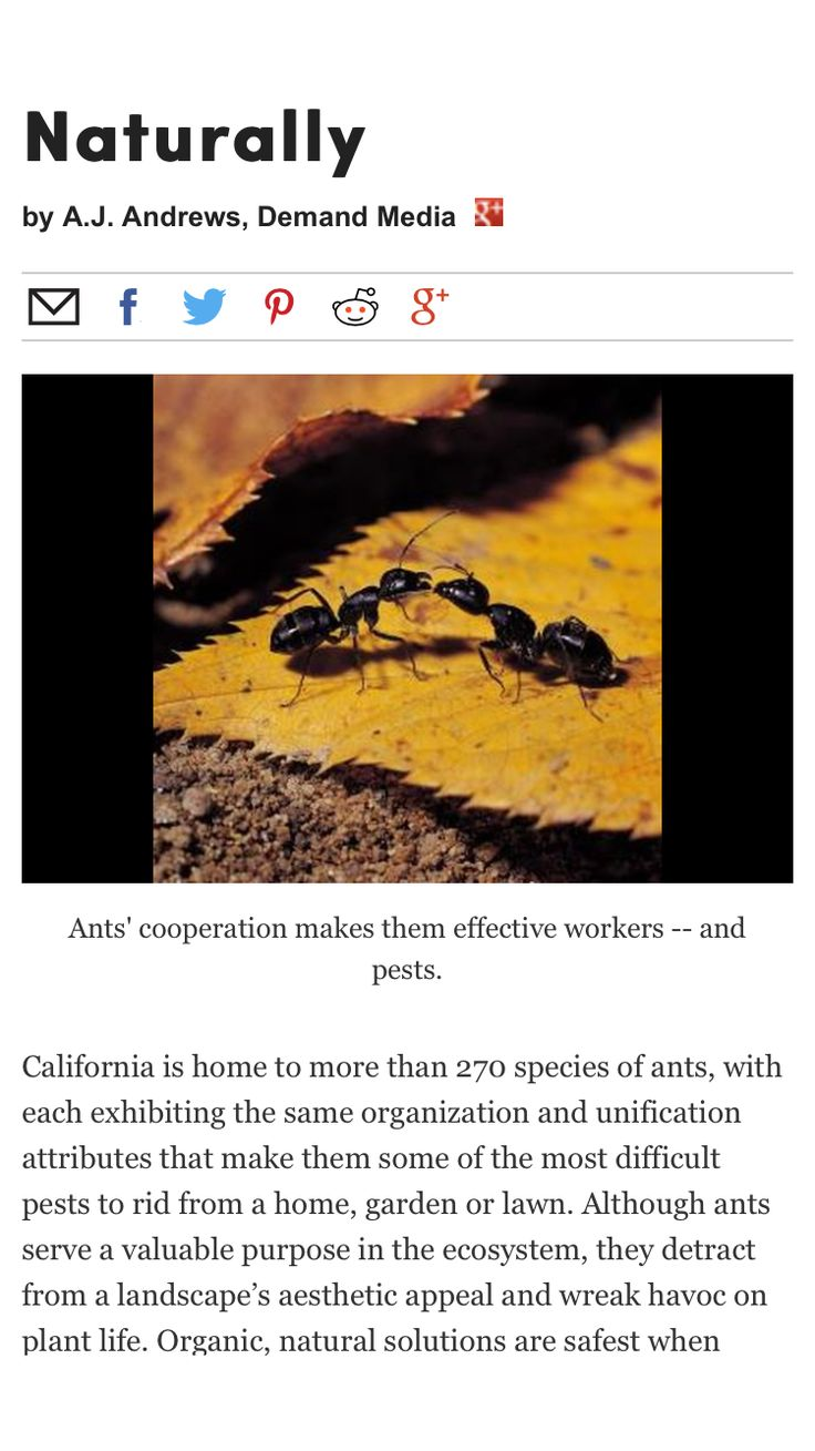 How to Get Rid of Ants in Your Yard, Naturally Get rid