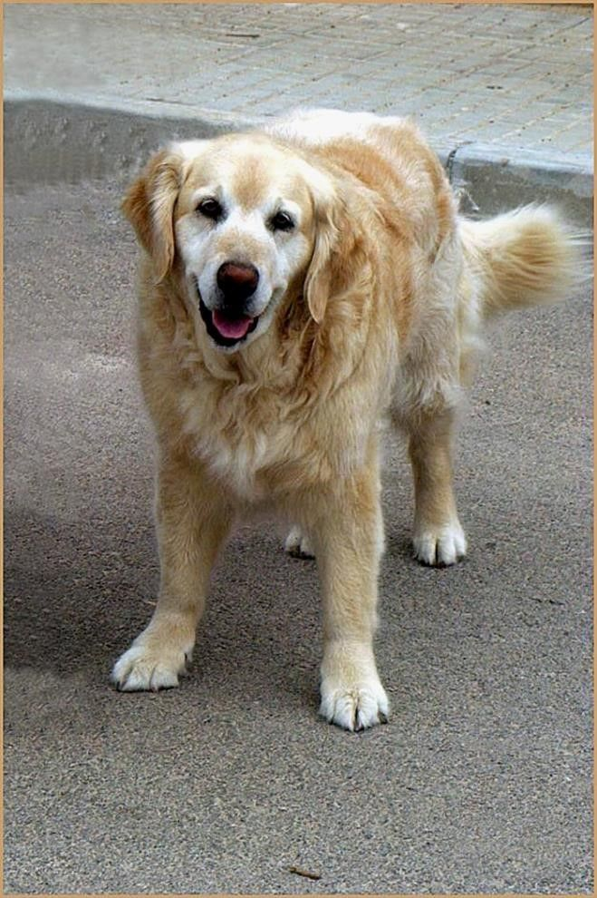 Schönes Wochenende Hund