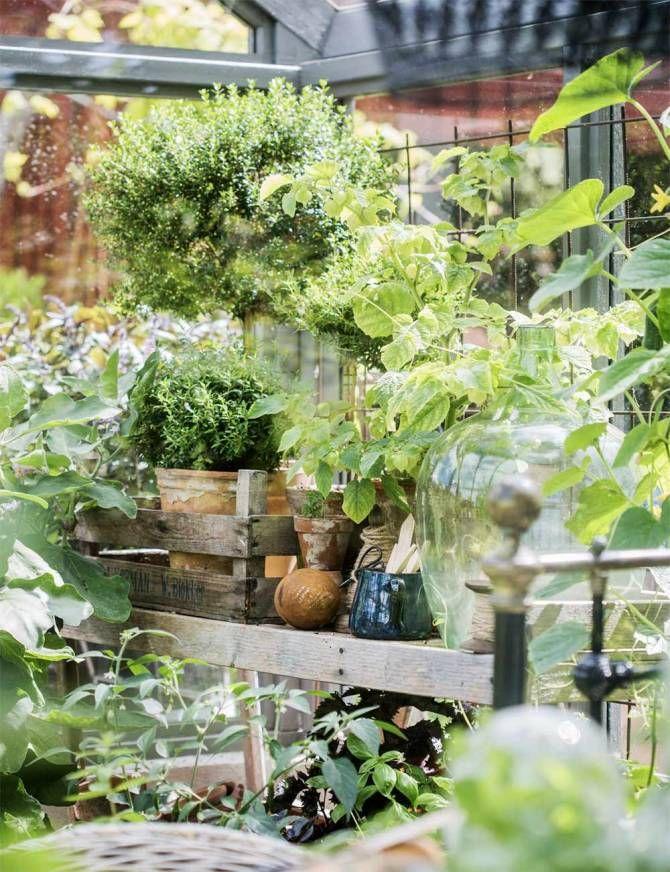 Redo för sommar. Ute stiger temperaturen och snart är det dags att plantera ut växterna vi försått. Trådrulle med sax, 149 kr, www.hemmetshjarta.se. Rostigt ägg, 13 cm, 110 kr, www.lillaorangeriet.se. Damejeanne, privat. Liknande finns på till exempel House Doctor. Blå kanna, 79 kr, Lagerhaus. Träbackar och patinerade terrakottakrukor kan du hitta på loppis och i plantbodar.