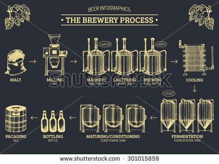 Vector beer infographics with illustrations of brewery process. Brewing producing design. Lager production hand sketched illustrations.