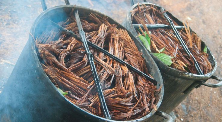 Everything You Need to Know About Ayahuasca