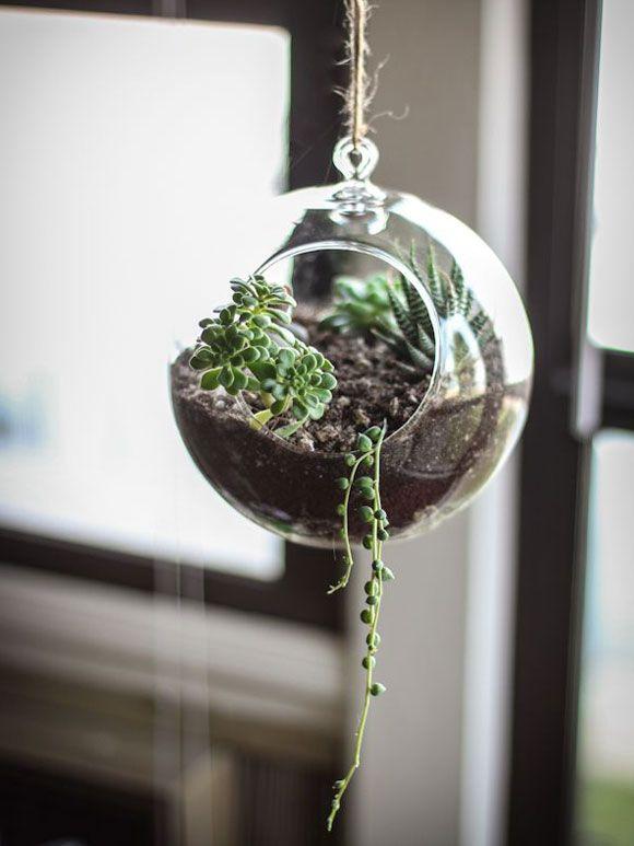 Decoreren met mini vetplantjes