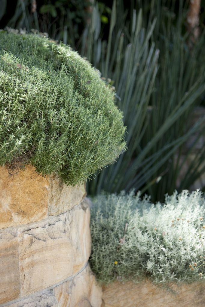 Love silver foliage Garden by Peter Fudge