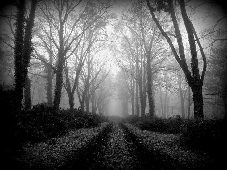 Chládná a pochnurná nálada bohnického hřbitova bláznů