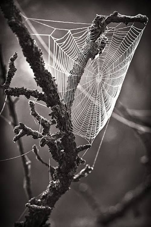 The forest felt like a spider's web, and I would never be able to free myself...Forest DARK