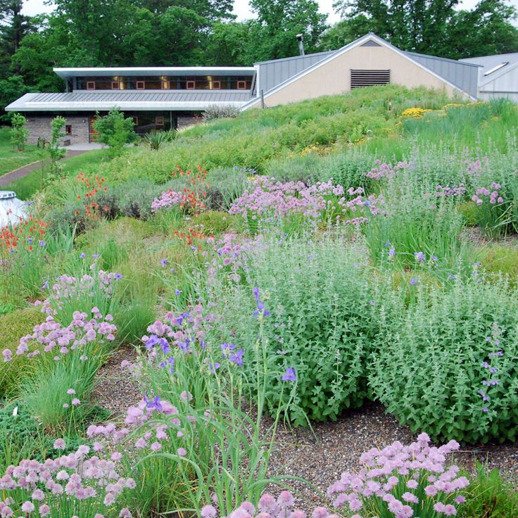 """""""Exploring The Morris Arboretum's Rooftop Gardens"""" Learn more about the Morris Arboretum's Rooftop Gardens. These Platinum LEED certified buildings feature a selection of xeric (drought resistant) plants from us."""