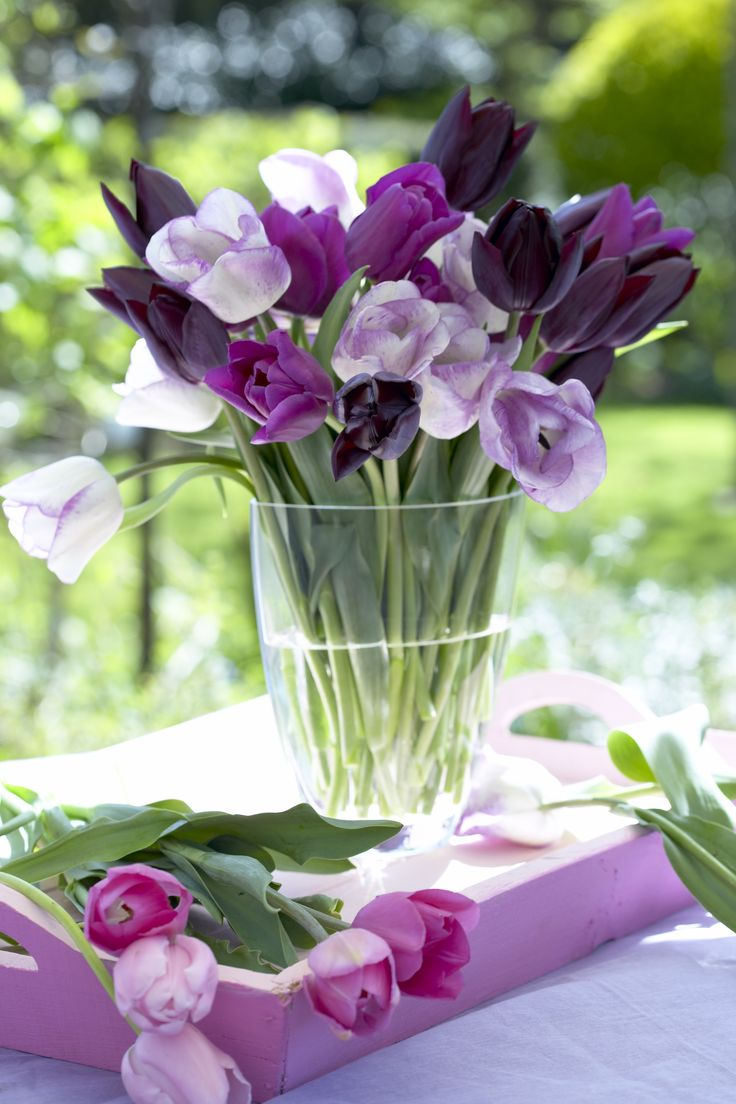Arrangement of Triumph Tulips Purple Passion Mixture. Beautiful blooms and color for this spring.