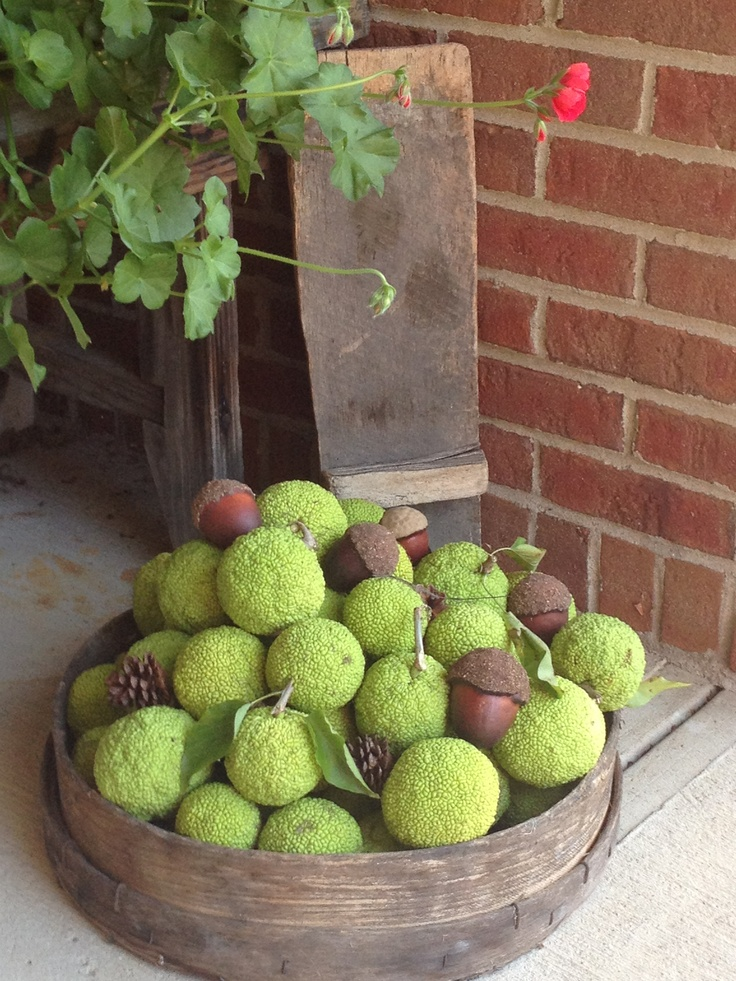 Hate spiders?  Here's what I do in the fall...keep a nice fall display of hedge apples and they naturally keep spiders away. And, it's pretty!