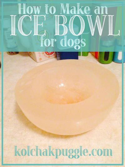 On a hot day, Koly and Fe LOVE a flavoured ice bowl. Not only does it keep your dog's water cold, as the day gets hotter, more of the flavoured ice melts encouraging them to drink more and stay hydrated!