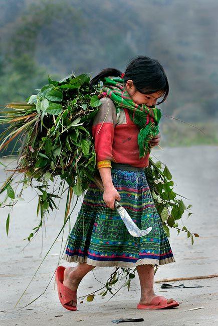 young girl farming, Pho Cao, Ha Giang, NE Vietnam.