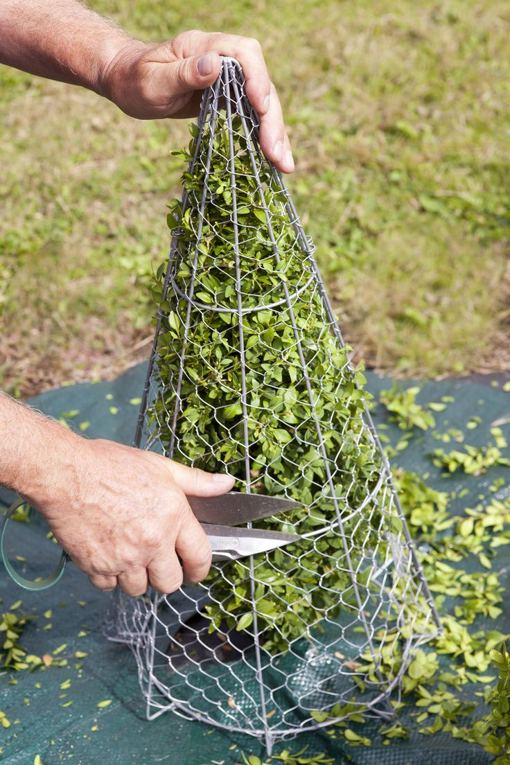 Topiary Frame - Cone - The Potting Shed Garden Tools