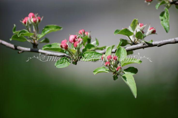 376spring pink flower  background