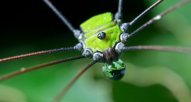 298 Best All Kinds Of Spiders Images On Pinterest