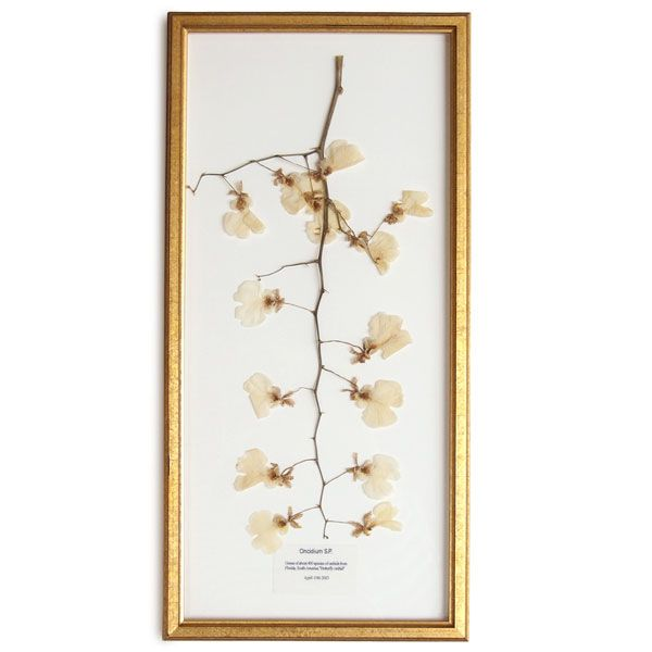 PLACER WORKSHOP : Dried Orchids Frame