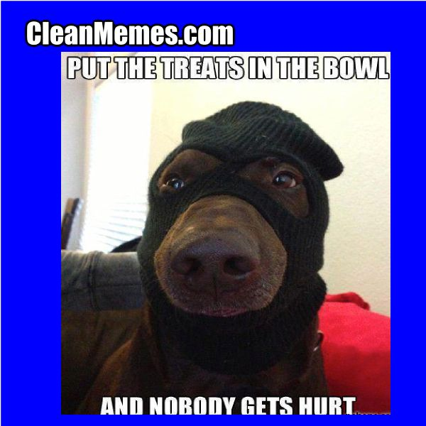 Funny clean dog memes - photo#30