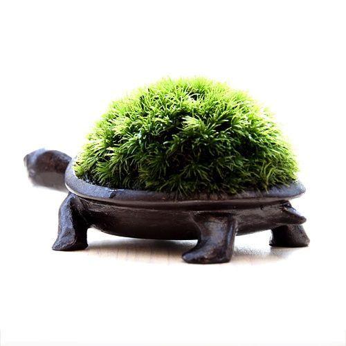 これかわいい!育てたコケが亀の甲羅になる盆栽キットが素敵 | IDEAHACK 育て方はこちら。  ・こまめな水やりが重要です。 ・スプレーでしっかり水をかけてください。(決してさーっとかける程度ではだめです。) ・水やりの後は軽く傾けて水をきります。逆さにすると苔が落ちるので注意してください。 ・長時間直射日光は避けましょう。 ・乾燥も苦手なので、エアコンの風、外気も避けましょう。 ・留守のする場合はしっかり水をあげた後、ビニールなどで包んで日の当らない場所に保管して下さい。これで2.3日は大丈夫です。 ・本体のブロンズの緑青や汚れは柔らかい布でお取りください。また緑青を風合いとして楽しむこともできます。 ・緑青はかつて信じられたような猛毒性はありませんが、口に含んだり、舐めたりするのは危険なのでお止めください。     気になるお値段は8,500円。 なかなか良いお値段ではありますが、お部屋に飾っておけば注目間違い無しのアイテムになるでしょう。