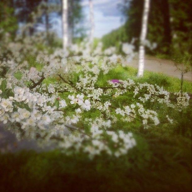 Kevään loistoa.