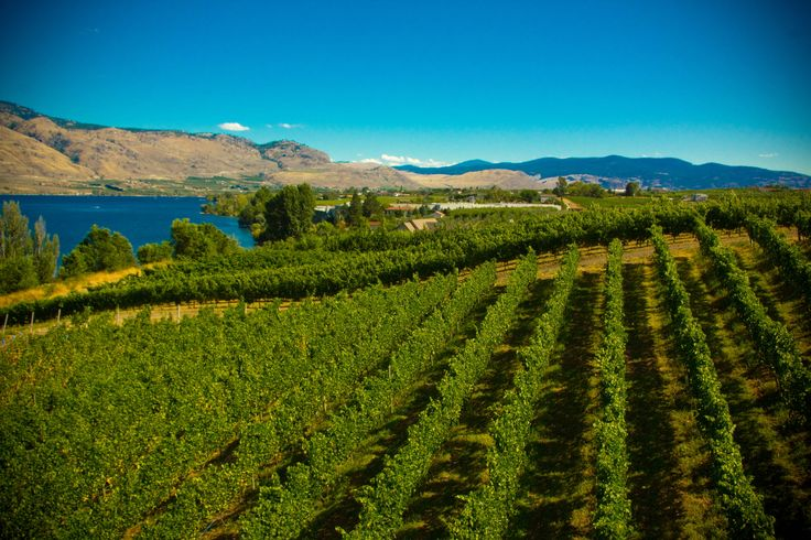 One of the many wineries in the Okanagan near Osoyoos, BC #Osoyoos
