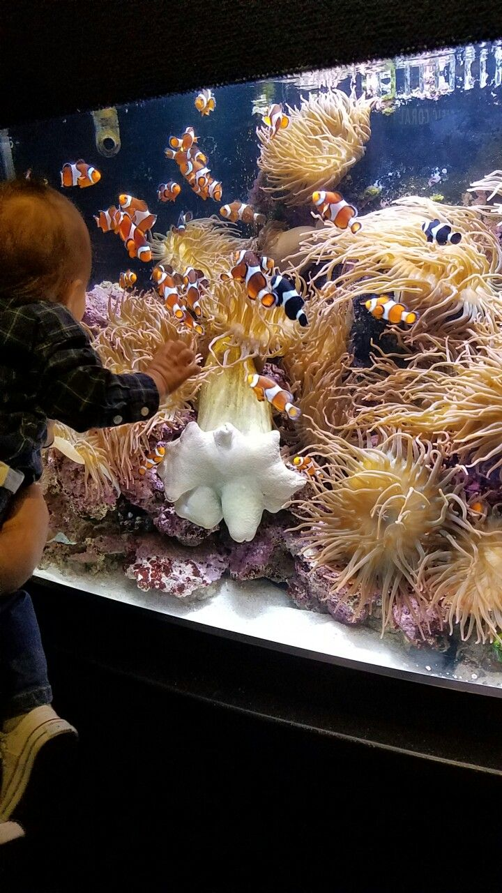 Mystic Aquarium in  Connecticut