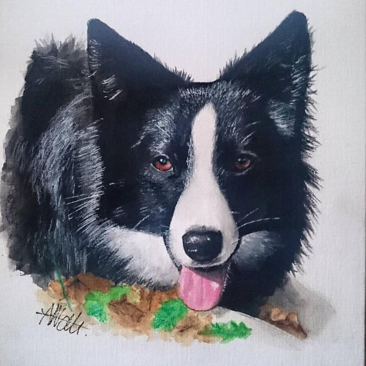dog realistic painting of a border collie