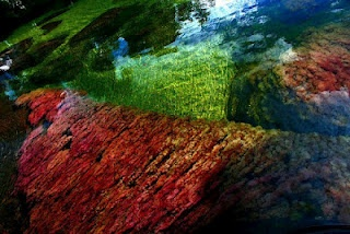 """Caño Cristales (also known as the """"river of five colors"""",""""the rainbow river"""" or """"the river that ran away from paradise"""")"""