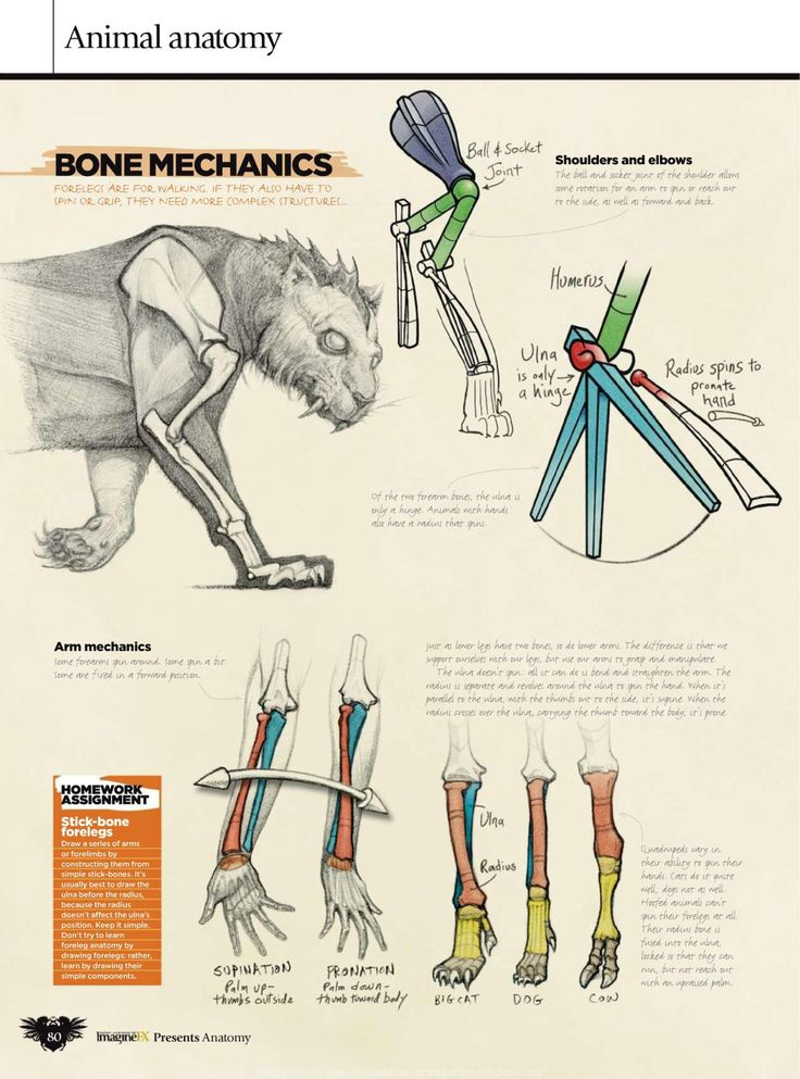 Veterinary Comparative Anatomy