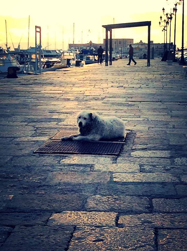 Trapani (Sicily). Lonely Dog at the Sunset Light.