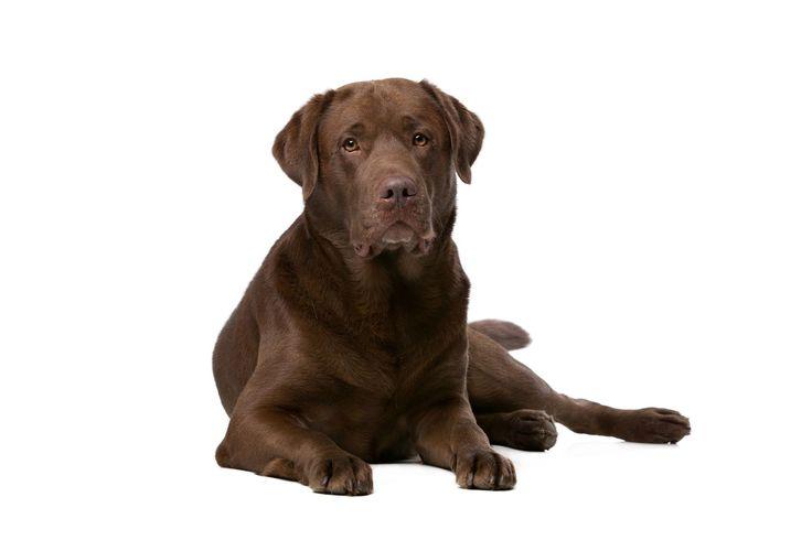 Familienfreundliche Hunderassen: 5 Rassen für Familien | Deine-Tierwelt.de Magazin