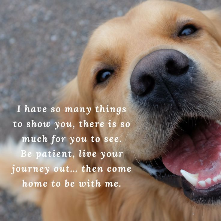 It's never easy. Each time you lose a dog, something inside you does. We really wish one day we will meet all our dogs and cats, they will come greet us across the rainbow bridge.