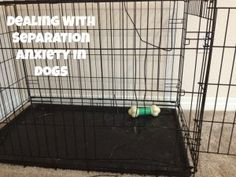 Dealing with Separation Anxiety in Dogs