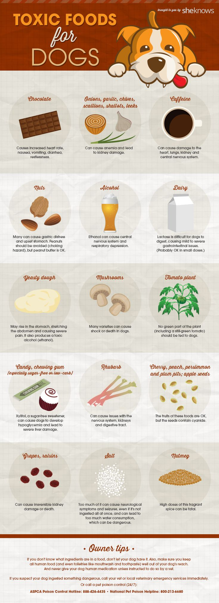 Here is a quality infographic that will teach you all about the different types of food that can be really harmful for your…