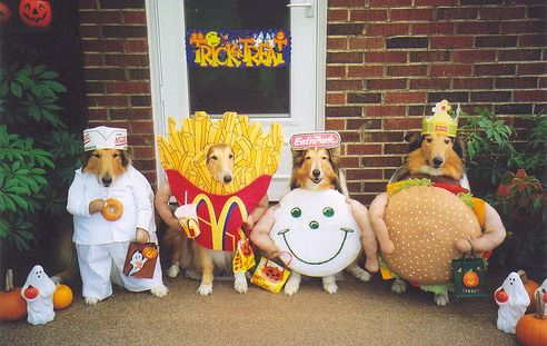 Fast food dogs: Funny Dogs, Dresses Up, Halloween Costumes, Dogs Costumes, Pet, Fast Food, Animal, Halloweencostum