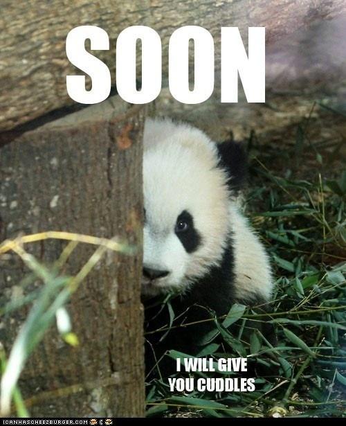 panda cuddles <3