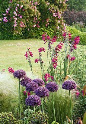 1000 id es sur le th me massif de fleurs sur pinterest parterres de fleurs bordure pour. Black Bedroom Furniture Sets. Home Design Ideas