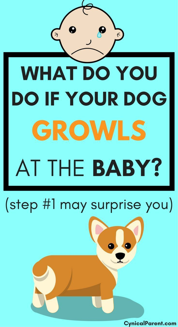 What Do You Do If Your Dog Growls At The Baby Step 1 May Surprise You Dog Growling New Baby Products Kids Fever