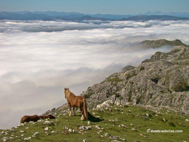 La sierra del Sueve. Rutas por la Sierra del Sueve #Asturias. [Más info] http://www.desdeasturias.com/la-sierra-del-sueve/